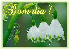 Bom dia Flor!
