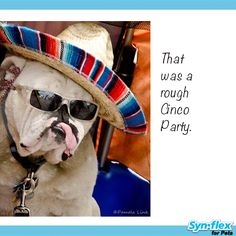 This pup needs some aspirin and a couple days to recover from that Cinco de Mayo wild celebration!!