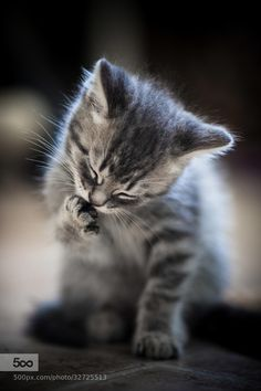 Photograph New Born Kitten by Lee Ys on 500px