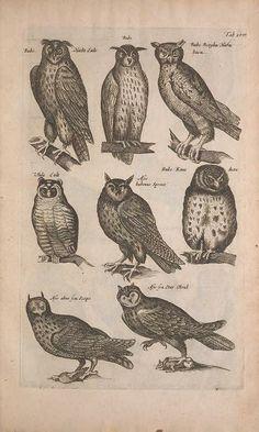 c. 5, pt. 6 [1657] - Historiae naturalis de quadrupedibus libri : - Biodiversity Heritage Library