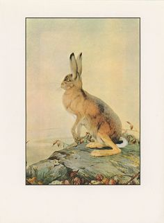 Fantastic Creatures, The Hare And The Tortoise, Fables Of Aesop, Edward Julius Detmold, USA, Antique Children Print. $10.00, via Etsy.