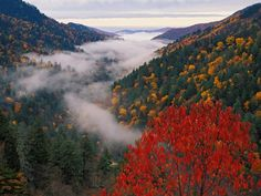 Autumn View of Fog from Morton Overlook, Great Smoky Mountains National Park, Tennessee, USA