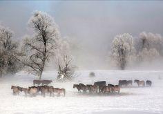 Doetinchem, de vijf van... - Nomad & Villager