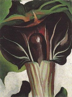 Georgia O'Keefe. Jack in the Pulpit No.1, 1930. National Gallery of Art, Washington, D.C.