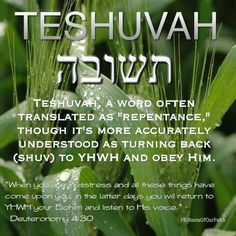TESHUVAH ~~ YOM KIPPUR. KEEP HIS HOLY DAYS & COMMANDMENTS so that YOU WILL BE SEALED In Time!