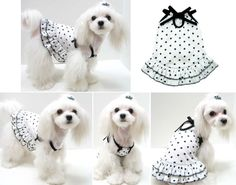 Dog Dresses - Polkadot Dress Pink Puppy Puppyzzang Dog Clothes1017 x 800 | 91.2 KB | pinkpuppy.com