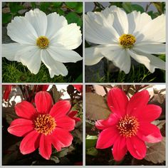 Kesäiset kukat Plants, Plant, Planets