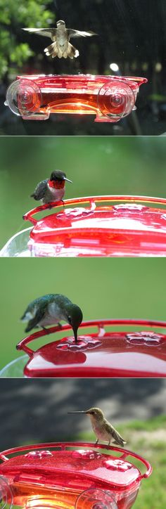 Hummingbird Feeder For Window. The kids saw this.