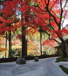 Japanese Zen Garden. Such beauty and simplicity. #serene #nature