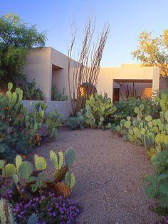 Architecture Design Concept, Landscape Architecture, Landscape Design, Garden Design, Desert Landscape, Succulent Landscaping, Succulents Garden, Backyard Landscaping, Dessert Landscaping