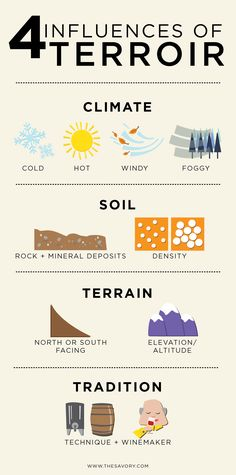 Terroir: Wine's Biggest Mystery Debunked #wine #infographic
