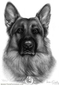 German Shepherd - graphite portrait drawing #germanshepherd