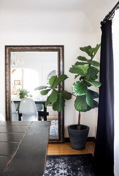 Pottery Barn Faux Potted Fiddle Leaf Fig Tree for $299 vs Michael's Artificial Fiddle Leaf Fig Tree for $50 copycatchic luxe living for less budget decor http://www.copycatchic.com/2017/03/pottery-barn-faux-potted-fiddle-leaf-tree.html?utm_campaign=coschedule&utm_source=pinterest&utm_medium=Copy%20Cat%20Chic&utm_content=Pottery%20Barn%20Faux%20Potted%20Fiddle%20Leaf%20Tree