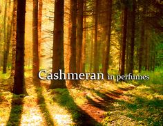 Cashmeran Chemical name 1,1,2,3,3 -pentamethyl - 2,5,6,7 - tetrahydroinden-4-one is a synthetic fragrance ingredient. It is not found in nature but copiously used in products we use every day. Please read more on https://www.facebook.com/cplaromas/photos/a.204401446257641.60067.204150379616081/951054851592293/?type=1&theater