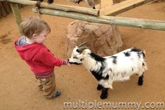Family Frolics - hand on with animals!