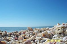"Piles of shells on my favorite beach: Bowman's Beach between Sanibel and Captiva Islands in Florida on the Gulf Coast. Add it to your ""bucket list.""  You won't regret it!"