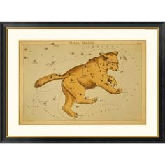 """Global Gallery 'Ursa Major, 1825' by Jehoshaphat Aspin Framed Graphic Art Size: 26"""" H x 34"""" W x 1.5"""" D"""