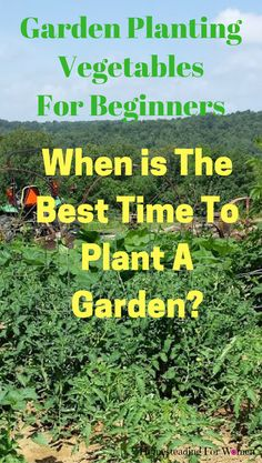 Garden Planting Vegetables For Beginners  The Best Time To Plant A Garden