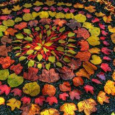 Fall Leaf Mandala