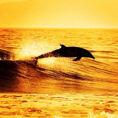 beautiful - I sometimes wish I were a dolphin =)