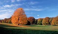 Our guide to fall foliage around Chicago for first-timers.