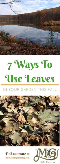 7 Ways to use fallen leaves in the garden. Click to find out how or pin it and save for later