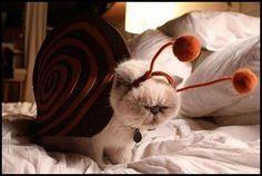 cutest snail