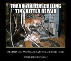 kitten tech support