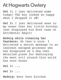 I never thought that Hedwig was sich a badass♡♡