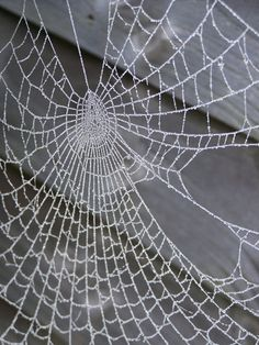 30 Astonishing Photographs of Spider Webs - The Photo Argus