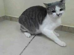 Please save this precious kitty.BABY..visit pets on deathrow on facebook New York City URGENT