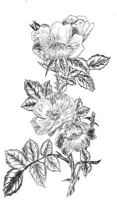flower2.11.jpg (939×1600)