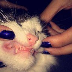 Grrrr !!! #mollypetitcoeur #cat #cats #kitten #kittens #kitty #animal #pets #petstagram #catstagram #love #grrr #miaou #meow #minou #katjes #gattini #gatito #gatinho #followmeonfb