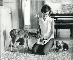 Audrey Hepburn, her Yorkie Mr. Famous, and her pet Fawn Pippin