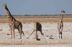 Namibia, Namibie