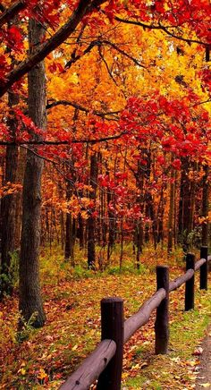 Way to Autumn