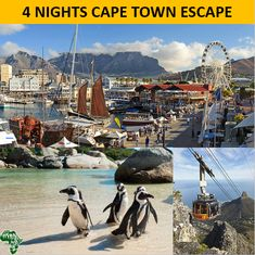 Fondly know as the Mother City, Cape Town is at the top of every international visitor's list to South Africa. Compassline designed a short itinerary that highlights the best of the city which is perfect for groups or FIT travellers, around all interests and budgets. This is the perfect base to then add on a safari experience into KwaZulu-Natal or the Kruger National Park... lots to see and explore! Kwazulu Natal, Kruger National Park, Cape Town, South Africa, Safari, Travelling, Places To Go, Highlights, Southern