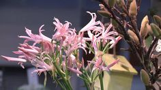 Winter Plaza 2014 - an floral event @ Cultra, Aalsmeer, with over 500 flowers. Meet & greet between growers & buyers. Organized by FloraHolland in cooperatio. Seasonal Flowers, January, Seasons, Pure Products, Tv, Floral, Plants, Seasons Of The Year, Television Set