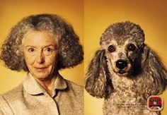 Tanmonkey.com  Google Images - Pets who look like their owners