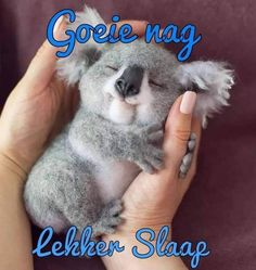 Good Night Sleep Tight, Good Night Blessings, Goeie Nag, Nature Animals, Sweet Dreams, Bear, Afrikaans, Cute, Special Quotes