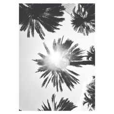 P3rfume ❤ liked on Polyvore featuring pictures and pictures - black and white