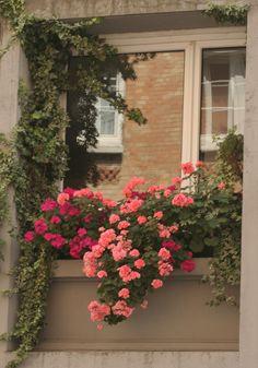 Paris window | Debbie Gascoyne | Flickr