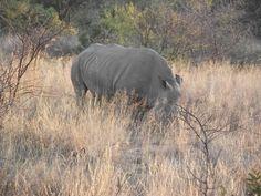 Sun City, Game Reserve, Wildlife, Elephant, Animals, Animaux, Animales, Elephants, Animal