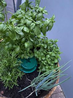 Can you see the Go Eco Compost Bucket hidden amongst these herb? Not only does it compost ALL of your kitchen food scraps, it is also a feeding machine for your herb 🌱 Compost Bucket, Eco Store, Organic Soil, Food Waste, Vegetable Garden, Herb, Seeds, Kitchen, Cucina