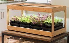 Everything You Need to Grow an Indoor Herb Garden - Modern Growing Vegetables Indoors, Growing Microgreens, Best Herbs To Grow, Best Led Grow Lights, Growing Lettuce, Organic Seeds, New York, Growing Seeds, Garden Supplies