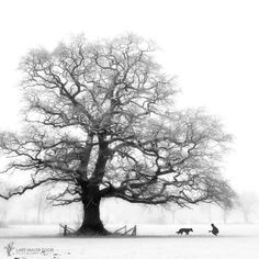 """""""His Favorite Tree"""" - by Lars Van de Goor Tree Drawings Pencil, Landscape Photography, Art Photography, Contemporary Photography, Tree Silhouette, Foto Art, Tree Tops, Realistic Drawings, Art Graphique"""
