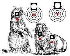 Free Online Printable Shooting Targets | Printable Air Rifle Targets 750 Designs on CD Hunting | eBay
