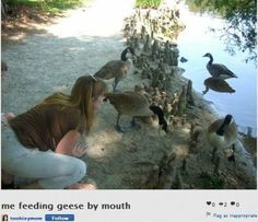 Don't feed the geese. Don't feed the geese with your mouth.