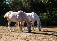 Ranch-Eros Farm: Close Encounters with Animals Close Encounters, Camel, Ranch, Greek, Horses, Island, Explore, Country, Animals