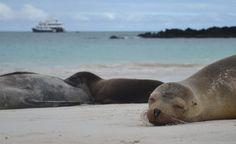 Visit the Galapagos Islands with a Cormorant Cruise. This first class catamaran offers a comfortable way of exploring the enchanted islands.
